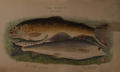 Image for The Fly-Fisher's Entomology with coloured representations of the natural  and artificial insect, and a few observations and instructions on trout-  and grayling-fishing