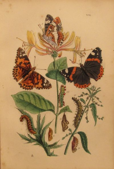 Image for Butterflies of Great Britain with their Transformations Delineated and  Described.  In full green morocco.