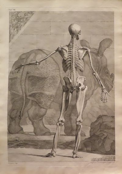 Image for Tables of the Skeleton and Muscles of the Human Body. Tab. VIII [Tabulae sceleti et musculorum corporis humani]