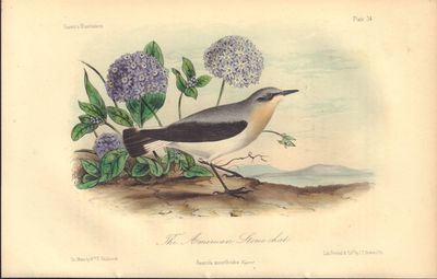 Image for Illustrations of the Birds of California, Texas, Oregon, British and  Russian America.  Fascicule 7