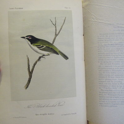 Image for Illustrations of the Birds of California, Texas, Oregon, British and  Russian America. Fascicule 5 Comprising text pages129-158 & plates 21-25  as issued in original wraps.